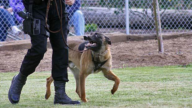 police_dog